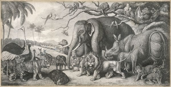 A group of jungle animals including an elephant, zebra, rhinosaurus, ostrich, tiger and a lion