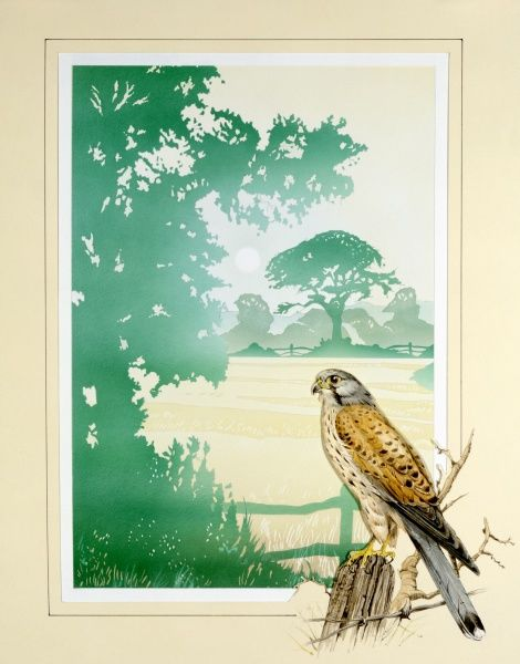 A Kestrel sat on a fencepost is set into the border framing a n atmospheric view of the late summer light throwing the shape of the trees of an English countryside into sharp relief. Painting by Malcolm Greensmith