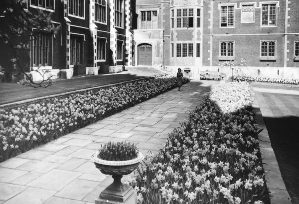 A young woman walks through a fine display of daffodils at Kew Gardens, London, England. Date: late 1940s