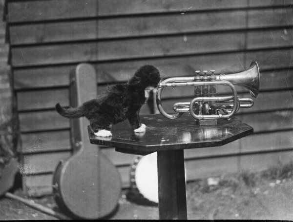 A mischievous black and white kitten playing a trumpet!