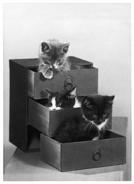 A kitten in each drawer. These three kittens appear to be having fun in this small chest of drawers