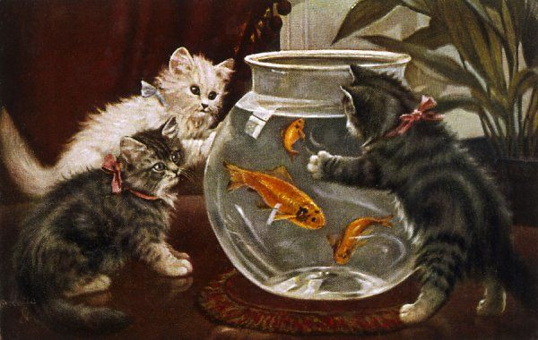 Three kittens are fascinated by a goldfish bowl