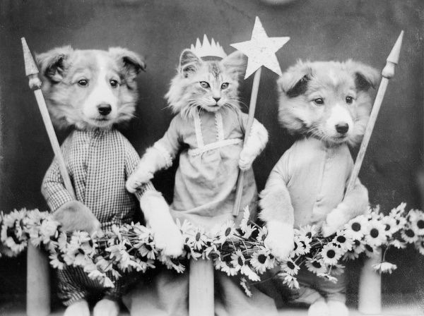 A cat May Queen holding up a star, with her two doggy bodyguards either side of her! Date: early 1930s