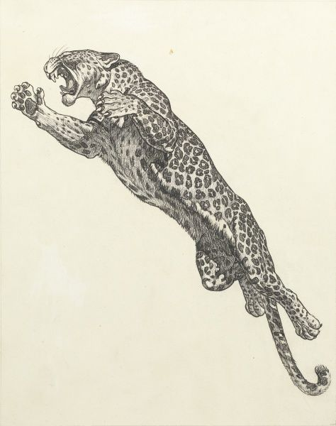 A snarling leopard caught in mid-leap
