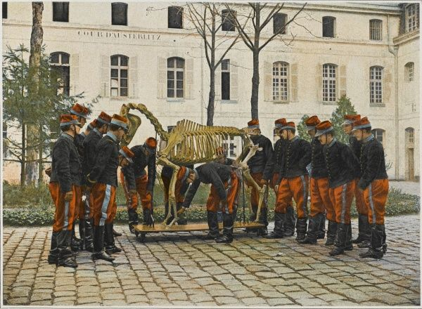 Cadets at the French military academy of Saint-Cyr learn about the anatomy of the horses they will ride