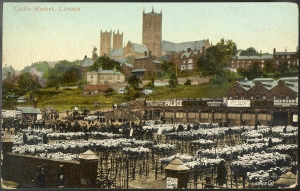 The Cattle Market at Lincoln overlooked by the cathedral : today the livestock is mainly sheep