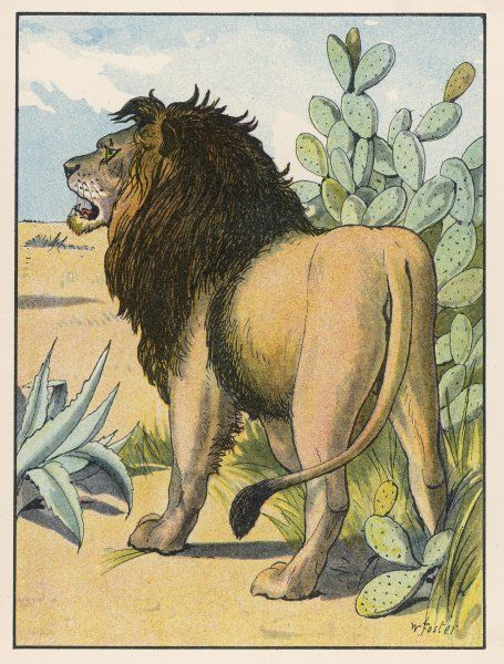 A male lion stands alone in a desert. (panthera leo)