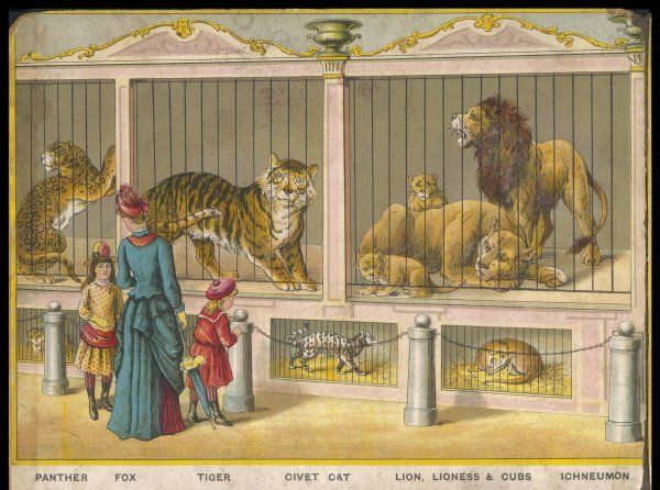 Regent's Park zoo, London Visitors admire lions, tigers, and other cats. Date: circa 1880