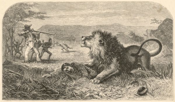 Scottish missionary and traveller, pinned to the ground by an unfriendly African lion, but fortunately rescued before becoming its lunch