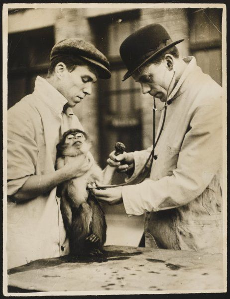 A veterinary surgeon and his assistant test a monkey's lungs at the zoo hospital