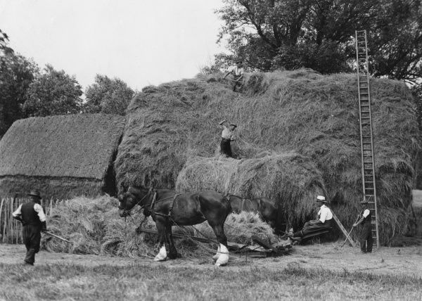 Four men, two horses and an extremely long ladder make a very large haystack