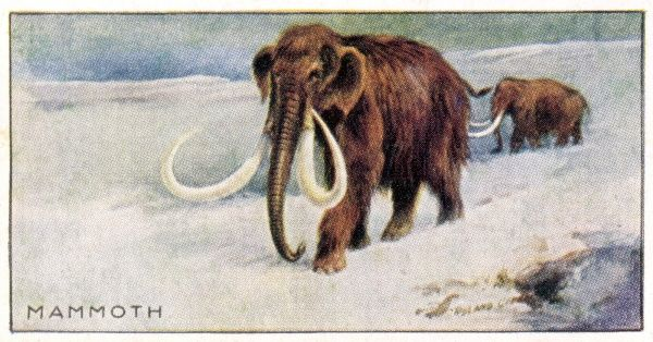 two mammoths in the snow Date