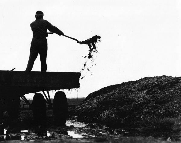A man shovelling manure from the back of a lorry