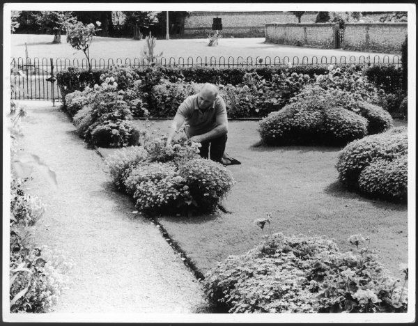 A man crouches in his neat garden, tending to some flowers