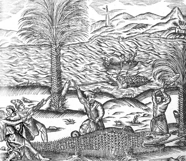 The manner of catching a crocodile