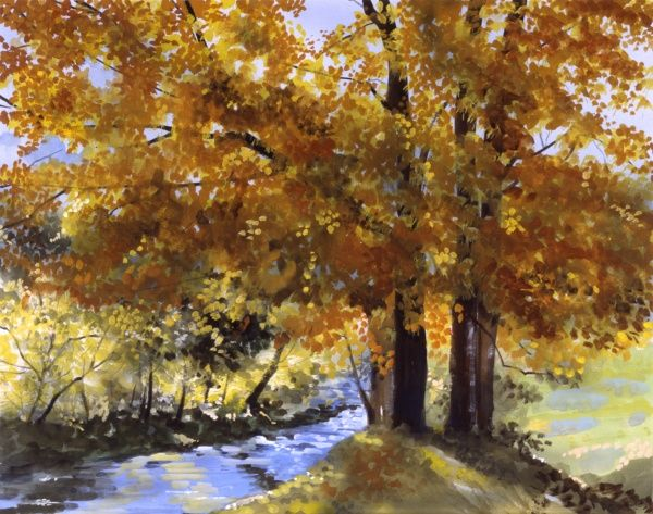 Maple Fall. A fine autumnal maple tree overhanging a small stream on a bright sunny day. Painting by Malcolm Greensmith