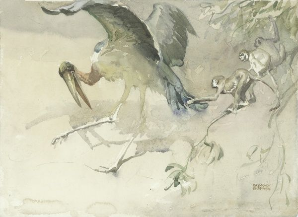 Marabou Stork and Monkeys