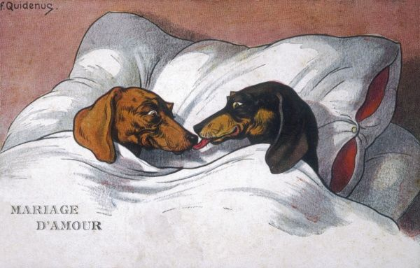 DACHSHUNDS IN BED A MARRIAGE OF LOVE