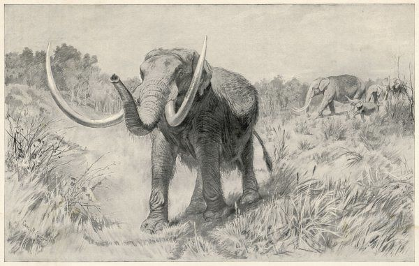 A family of Mastodon, roaming the area of modern-day Manhattan Island. Bones of this large forerunner of the modern-day elephant have been found in this region