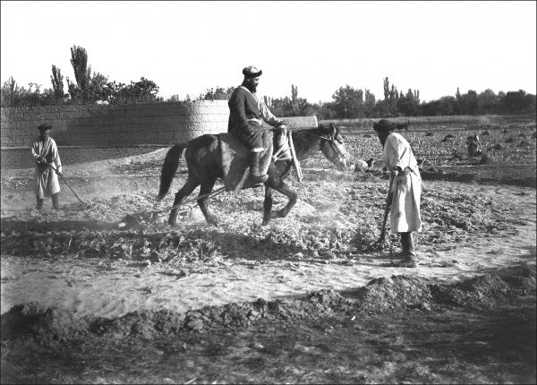 Three men training a horse in Kashgar, western China. Photograph by Ralph Ponsonby Watts
