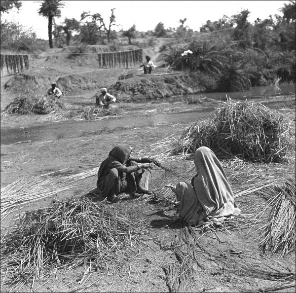Collecting and tieing reed bundles by a stream in a province formerly part of India and now wiithin modern Pakistan. Photograph by Ralph Ponsonby Watts