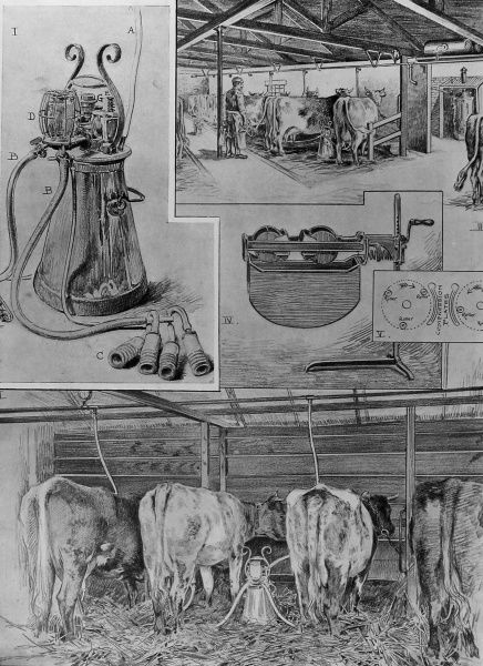 Illustration to show the process of milking cows with the Lawrence-Kennedy cow milker. The sketch also shows in fig.iv and v, a new hand- milking machine invented by Mr. C.S. Padfield of Bath