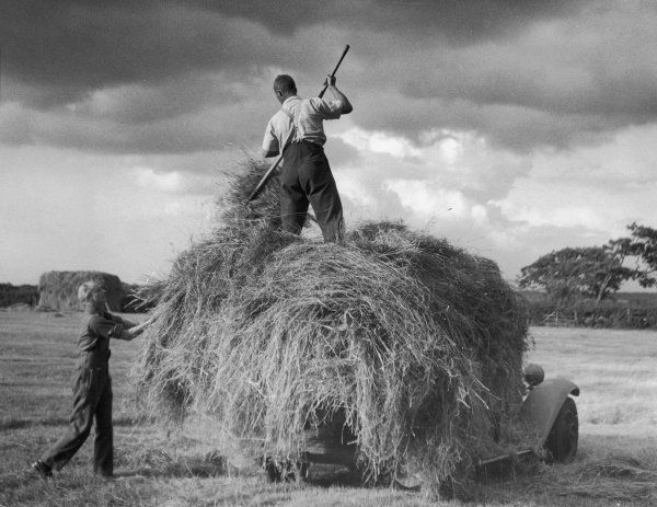Haymaking with a 'modern' haycart. Using a motor van for gathering and transporting a fine crop of hay in the Wirral, Cheshire