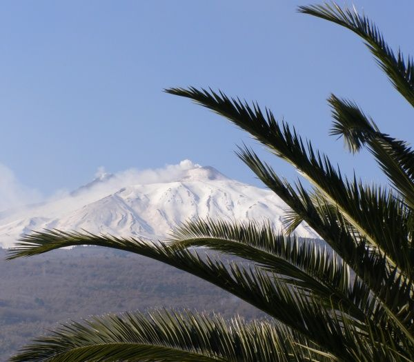Mount Etna, with palm fronds, Sicily, Italy