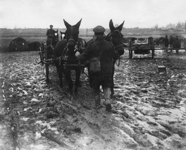 Mule teams crossing a muddy field near Arras, northern France, during the First World War. Date: 19 January 1918