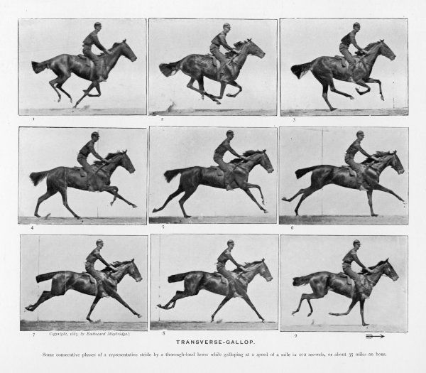 Horse - transverse gallop