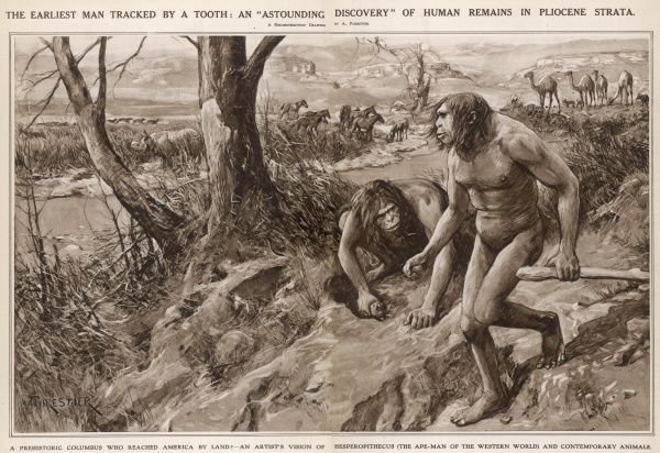 An artist's vision of Hesperophiticus (The Ape-Man of the Western World) belonging to the Pliocene epoch