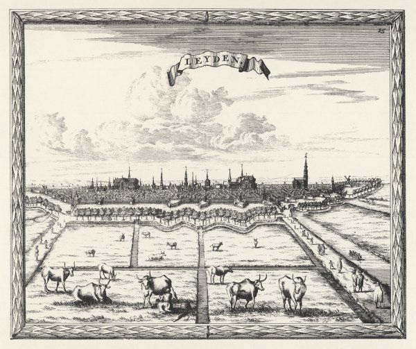 Leiden: general view, with cows in a field in the foreground