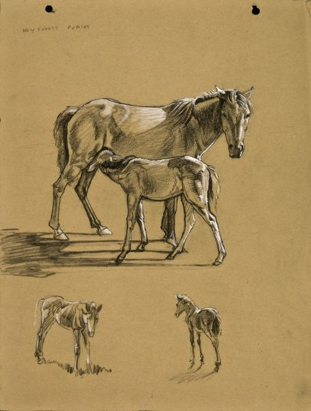 New Forest Ponies. Pastel studies by Raymond Sheppard