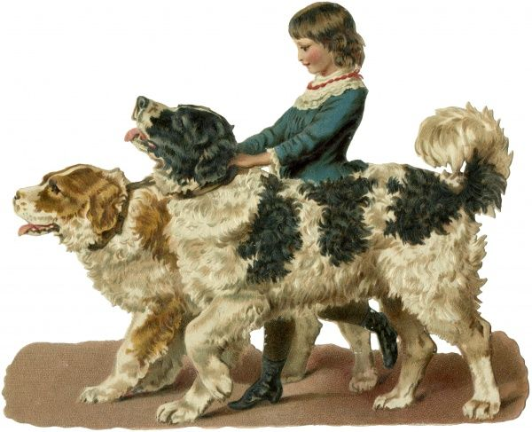 A child holds two Newfoundland dogs, one brown and white, the other black and white. Date: circa 1890