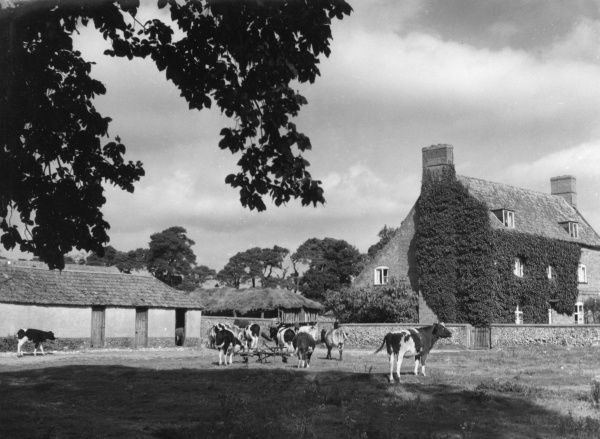 A typical farmstead at Swaffam, Norfolk, England. Date: 1950s