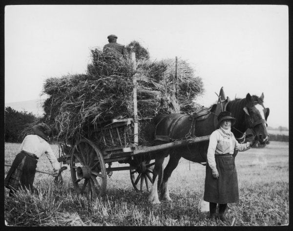 Harvesting on a Northumberland farm, England, where, even in the 1930s, many of the women workers still wore their quaint costumes of many generations past