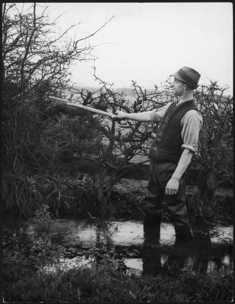 A study of a Northumberland hedger, one of the men who keeps the hedgerows of rural England under control