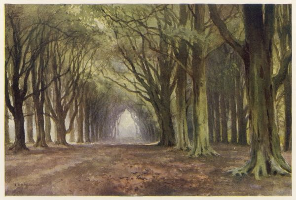 The Beech Avenue, Thoresby Park