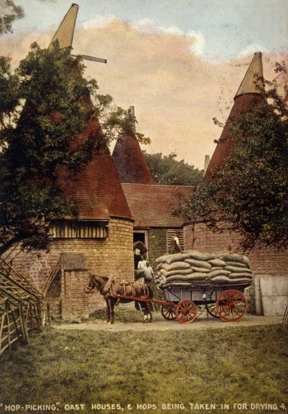 Oast houses and hops being taken for drying. Date: 1908