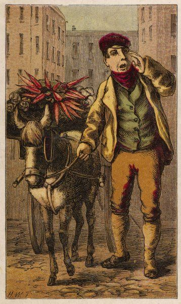 London barrow boy in breeches, stockings, waistcoat, short jacket, red muffler & peaked cap, shouts his wares of carrots & cabbages drawn by a donkey cart