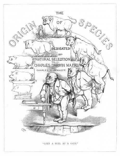'Like a bull at a gate'. Satire on Darwin's 'Origin of Species' showing the evolution of man from pig via bull. Title page