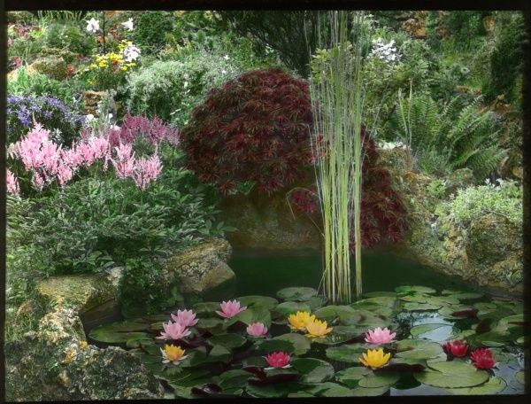 An ornamental pond in an unidentified garden. Lily leaves and flowers float on the water, and other flowers flourish in the surrounding rockery