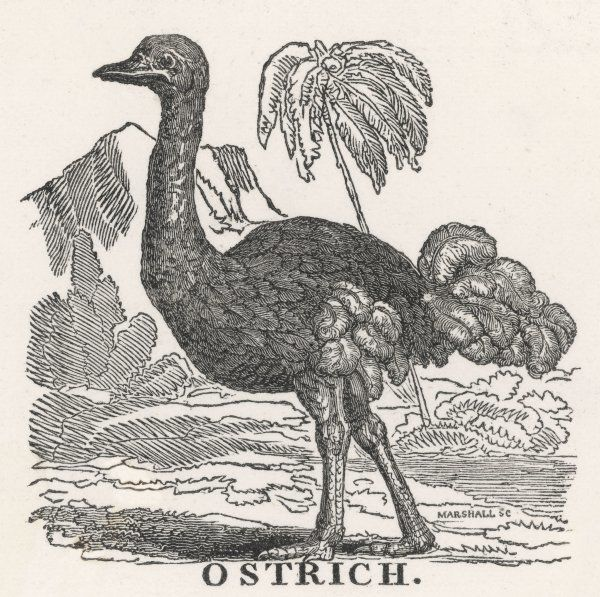 A profile view of an ostrich within a landscape of hills and palm trees