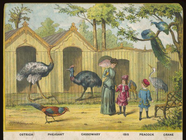 Regent's Park zoo, London Visitors admire ostrich, ibis, cassowary and other exotic birds