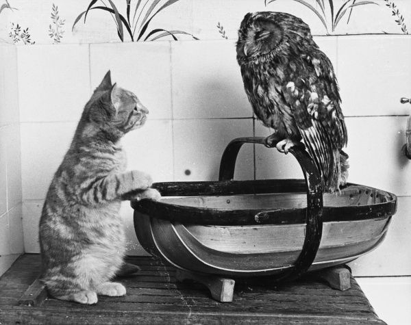 The Owl and the Pussycat: 'Wake up, aren't you even a bit scared of me, Owl?' Date: 1960s