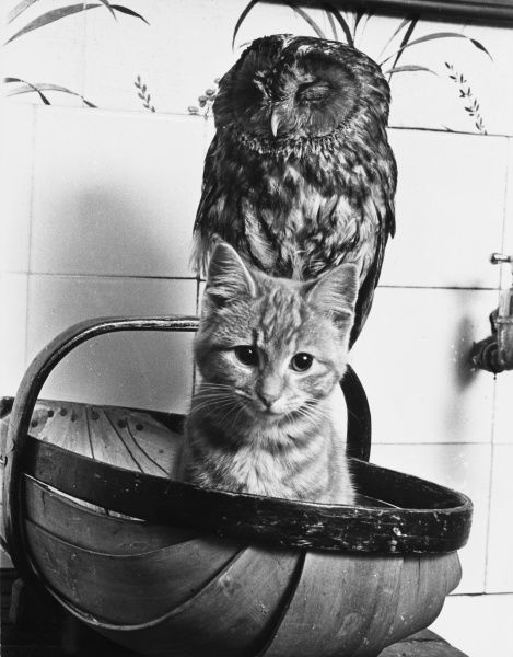 The Owl and the Pussycat have fun in a basket together! Date: 1960s