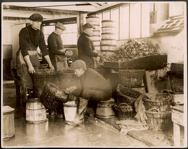 Oysters, found to be a valuable remedy for the influenza epidemic, are sorted and packed by fishermen in Whitstable, Kent, for distribution to the hospitals