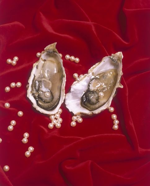 Oyster shells and pearls. Date: 1988