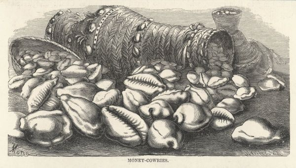 Money-cowries of Pacific Islanders