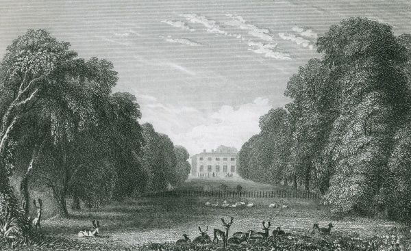 Deer and sheep relax in the grounds of Packington Hall, Warwickshire, the seat of the Earl of Aylesford Date: circa 1830